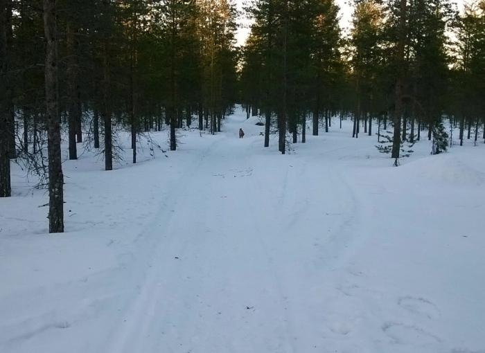 Metsäpolut ovat juuri nyt ajokunnossa.