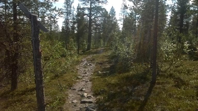 Ruijanpolulla oli pari kivikkoisempaa kohtaa, missä sai teiteilla. Erityisen mukava oli jouheva alamäki, joka toi mäenpäältä ladun varteen kohti Saariselkää ajettaessa. Suosittelen!
