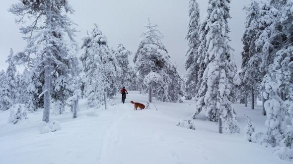 Winterwonderland ja fatbike.