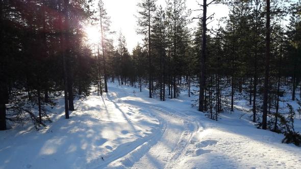 Ura on metsässä ristelevistä kaikista vahvin, ja selvästi kelkalla huollettu. Reitillä pysymistä avittavat punaiset aurausviitan pätkät puissa.